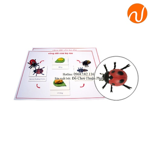 Giáo cụ montessori vòng đời bọ cánh cứng GC36-398