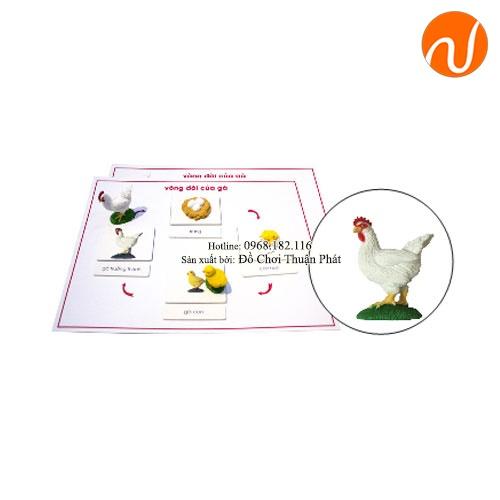 Giáo cụ montessori vòng đời con gà GC36-400