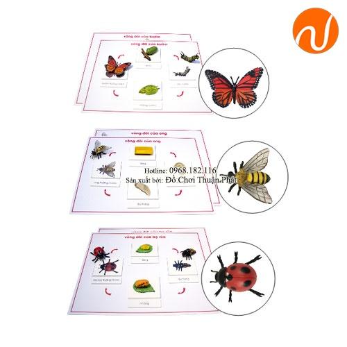 Giáo cụ montessori vòng đời của bướm, ong, bọ cánh cứng GC36-372