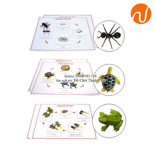 Giáo cụ montessori vòng đời của kiến, rùa, ếch GC36-374