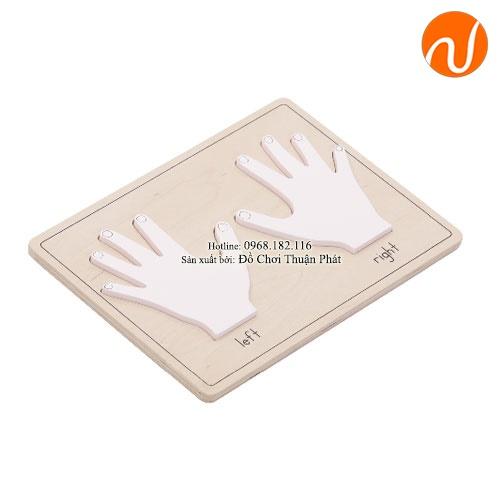 Giáo cụ bộ xếp hình bàn tay, tiếng Anh GC36-272 giúp phân biệt bàn tay bằng trực quan