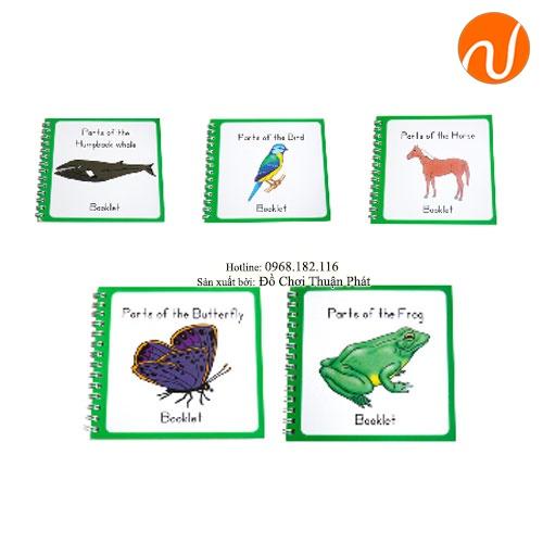Giáo cụ cuốn sách nhỏ Con ngựa, con bướm, con ếch, con chim, con cá - Combo GC36-325 giúp bé biết gọi tên động vật