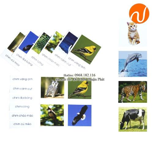 Giáo cụ montessori ghép cặp ảnh, chữ tương ứng theo chủ đề động vật UDLQ-5651