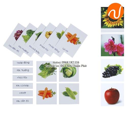 Giáo cụ montessori ghép cặp ảnh, chữ tương ứng theo chủ đề thực vật UDLQ-5652