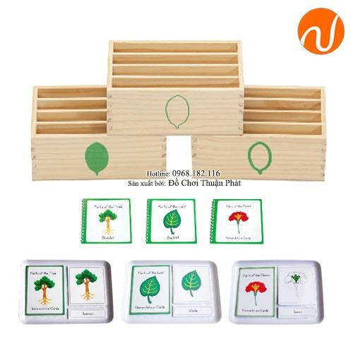 Giáo cụ 3 bộ hộp 4 ngăn đựng thẻ hình lá GC36-312 Để đựng và phân loại các thẻ hình lá theo đường viền từ đậm đến nhạt.
