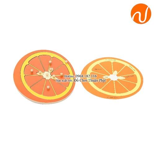 Giáo cụ xếp hình quả cam loại ý có hướng dẫn bằng tiếng anh GC36-363 giúp nhận biết các bộ phận của quả cam