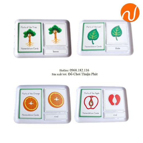 Giáo cụ thẻ 3 phần Cây, lá, hoa, táo - Combo GC36-324 Hướng dẫn trẻ xếp đúng theo hình cây