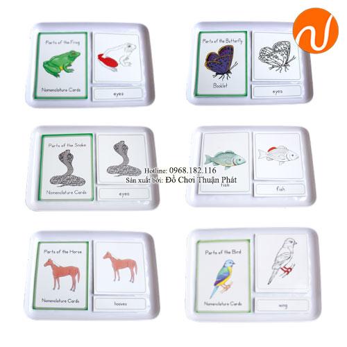 Giáo cụ thẻ 3 phần Con ngựa, con bướm, con ếch, con chim, con cá - Combo GC36-326