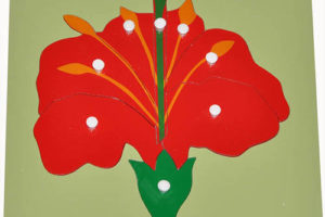 Hướng dẫn sử dụng giáo cụ Montessori bộ xếp hình bông hoa