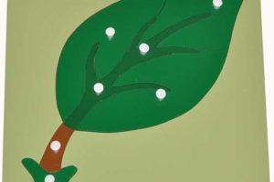 Hướng dẫn sử dụng giáo cụ Montessori ghép hình lá cây