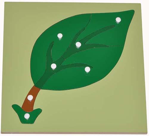 Hướng dẫn sử dụng giáo cụ Montessori ghép hình lá cây-1