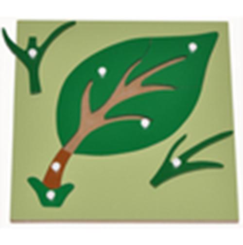 Hướng dẫn sử dụng giáo cụ Montessori ghép hình lá cây-2