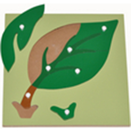 Hướng dẫn sử dụng giáo cụ Montessori ghép hình lá cây-3